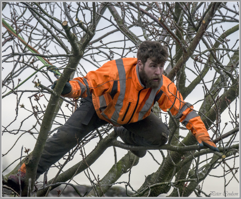 Arborist at work by pcoulson