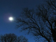 12th Mar 2017 - Tree at twilight with moon flare