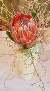 13th Mar 2017 - Our beautiful protea in pastel