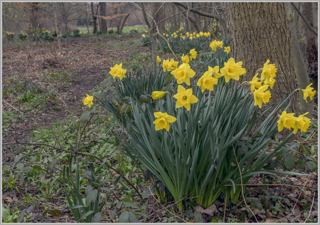 Spring +2 by pcoulson