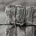 PLAY March - 60mm f/2.4: Occasional Fence-Post 18 by vignouse