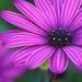 Spring Blossom by joysfocus
