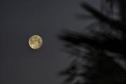14th Mar 2017 - Palms Waving to Moon