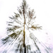 Pine Tree Shot #14 - Zoom Burst by skipt07