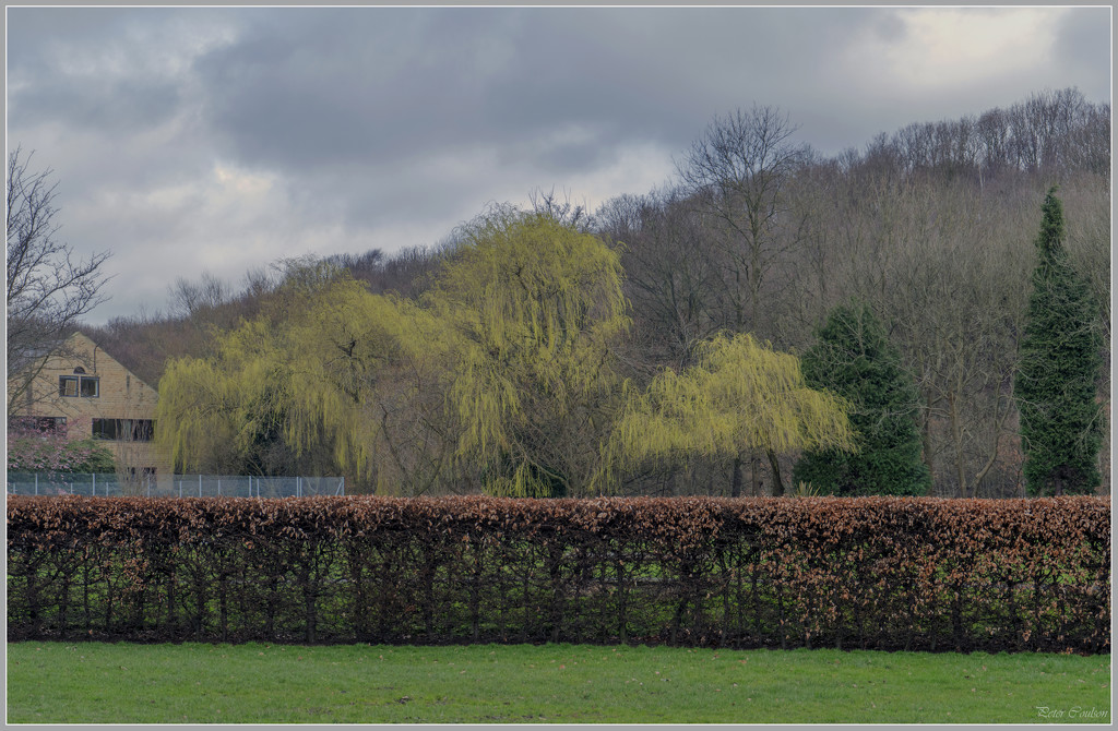 Spring Leaves by pcoulson