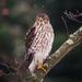 Here Birdie Birdie Birdie  by lesip