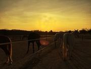 14th Mar 2017 - Horses...
