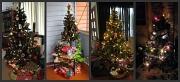25th Dec 2010 - Christmas Trees on Christmas Day