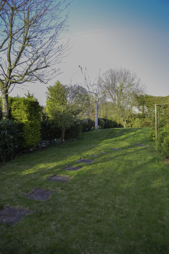 Back garden - first cut by jon_lip