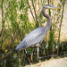 Drive By Blue Heron! by rickster549