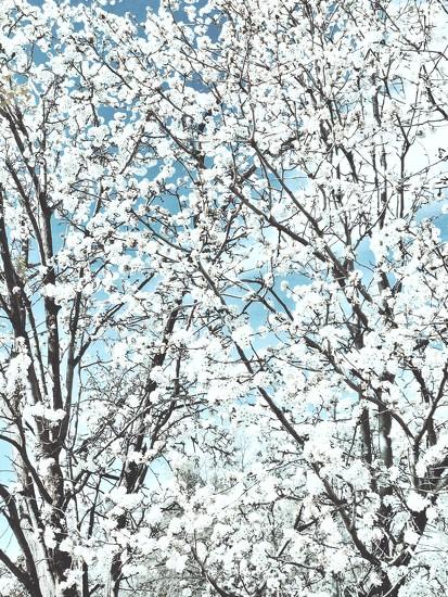 Snowy Blooms by gardenfolk
