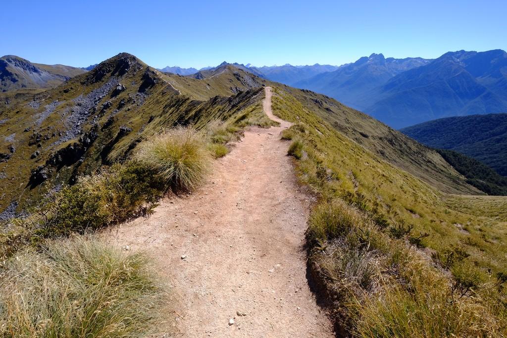 Along the ridge top by dkbarnett