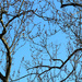 Framed tree branches