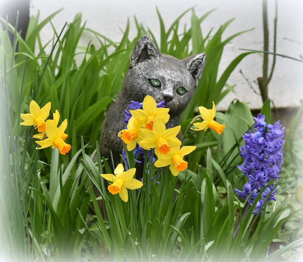 Spring flowers on Sammy's grave by rosiekind