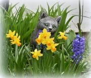 18th Mar 2017 - Spring flowers on Sammy's grave