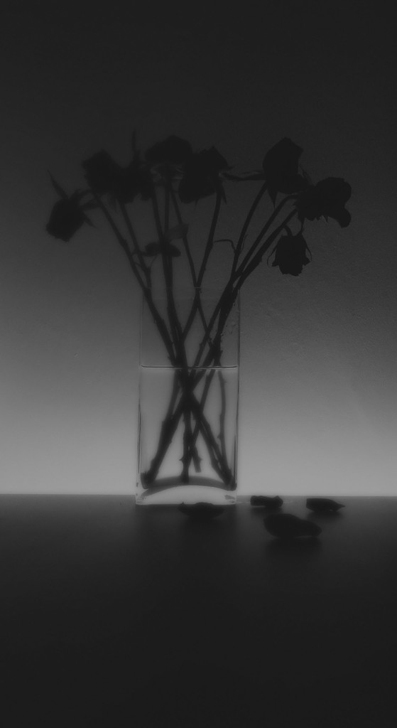Wilting by m2016