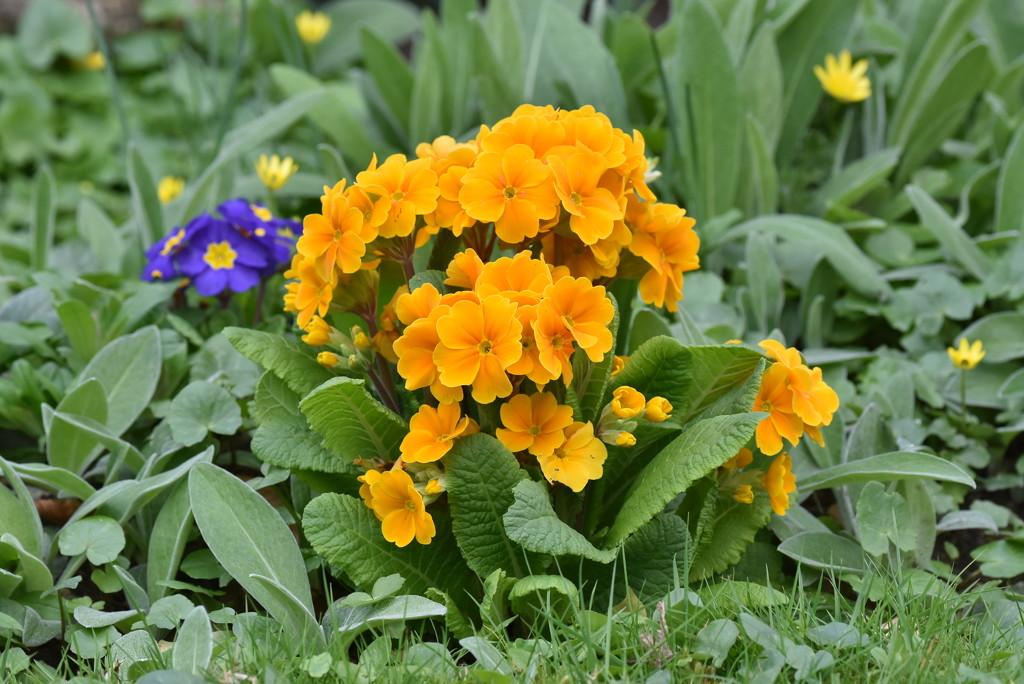 More spring flowers  by rosiekind