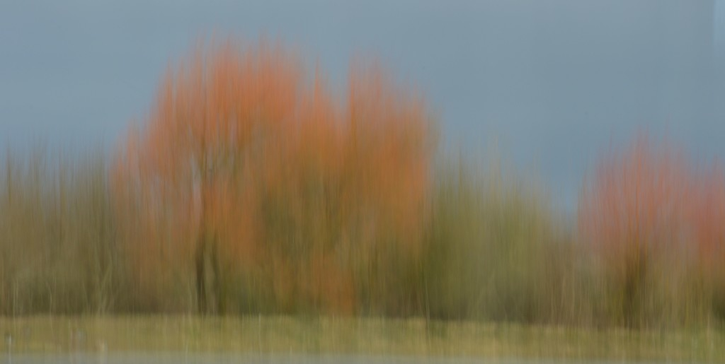 Lakeside Trees by barneyone