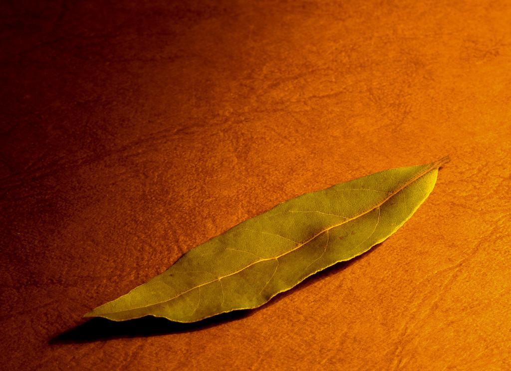 Bay leaf by toinette