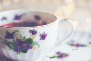 20th Mar 2017 - Teacup for T