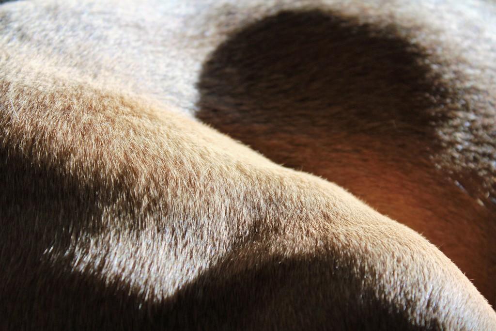 doggie texture by adi314