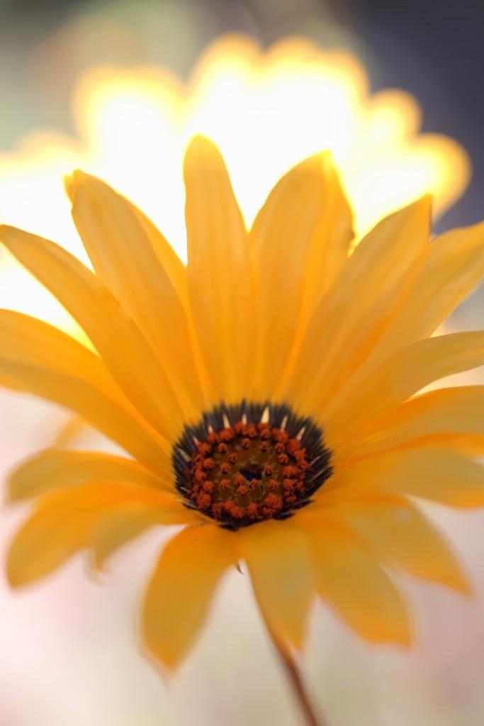 sun shiney by blueberry1222