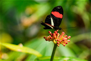21st Mar 2017 - The Butterfly Jungle