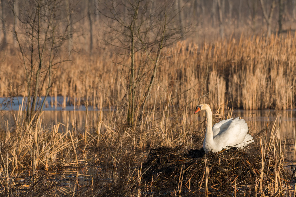 Nesting by dridsdale