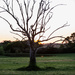 Solitatary Tree at Sunset