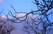 23rd Mar 2017 - Branches on the tree