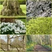 Spring Walk at Anglesey Abbey