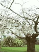 2nd Mar 2017 - Blossom