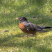 Robin on the Run