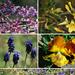 Flowers, Week 12