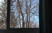 25th Mar 2017 - Tree through the window