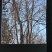 Tree through the window