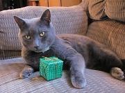 25th Dec 2010 - Christmas Cat