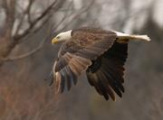 25th Mar 2017 - Flint Hills Nature Trail Surprise