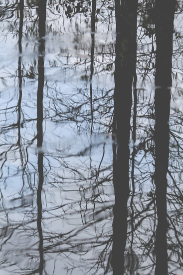 Reflection by tskipper