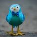 Unknown Bird, Maybe a Bluebird!