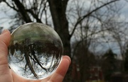 27th Mar 2017 - Tree through a crystal ball