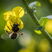 PLAY March - Fuji 60mm f/2.4: Pollinator at Work by vignouse