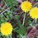 Weed Season by linnypinny