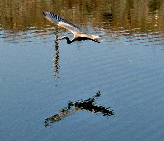 I Love Gliding Across The Lake by moviegal1