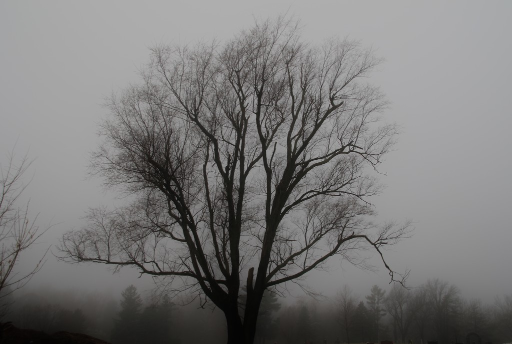 foggy day tree by lynnz