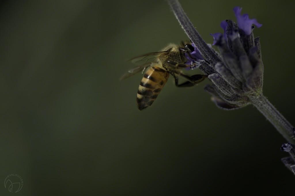 Bee Shindig by evalieutionspics
