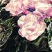 """Fallback"" flowers"