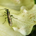 Critter on Himalayan Rhododendron Flower  by jgpittenger