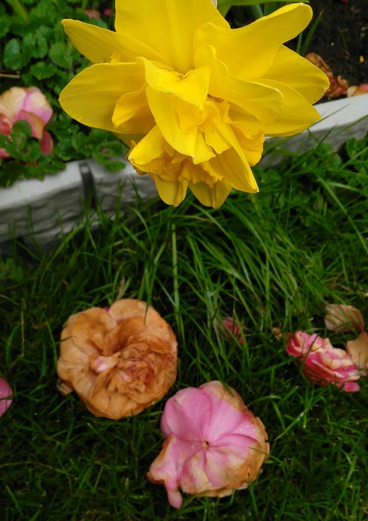 Spring flowers - past & present. by jmdspeedy