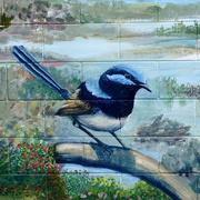 31st Mar 2017 - A Beautiful Blue Wren....._DSC5866